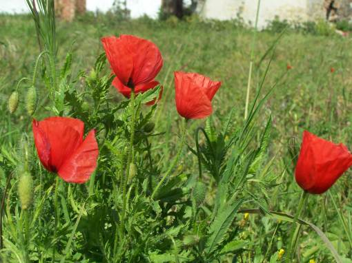 vermelhoverde