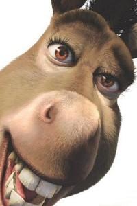 burro-shrek